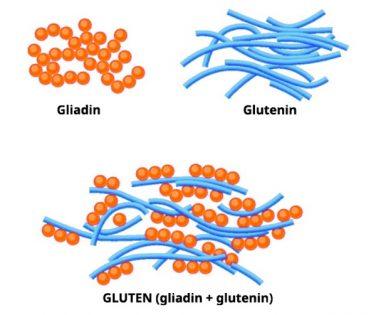 gliadin in glutenin