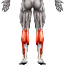 Mečne mišice