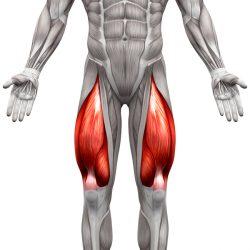 Sprednje stegenske mišice