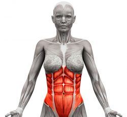 Vaje za trebušne mišice