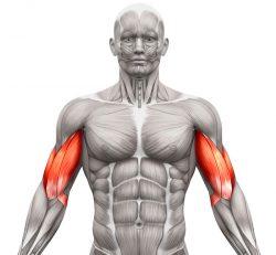 Vaje za biceps