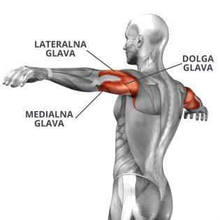 mišica triceps