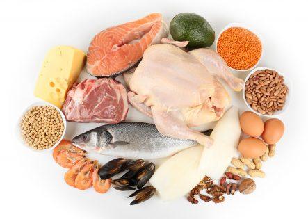 hrana z visoko vsebnostjo beljakovin