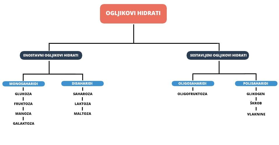 vrste ogljikovih hidratov